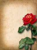 stock photo of san valentine  - Vintage card for congratulations with red rose - JPG