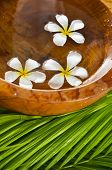 white frangipani in wooden bowl of and green leaves