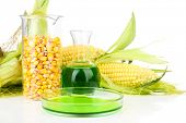 picture of ethanol  - Conceptual photo of bio fuel from corn - JPG