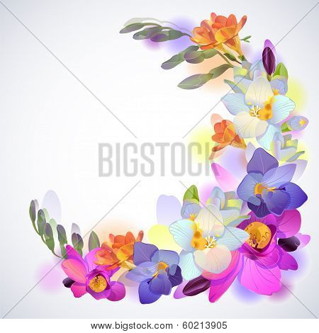 Greeting square background with freesia flowers
