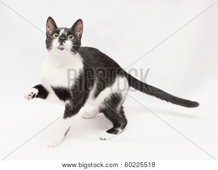 Black And White Cat Frightened Stretches Foot