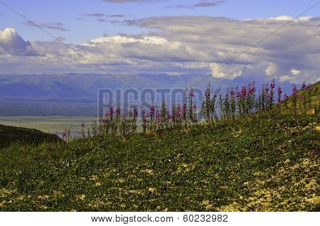 Mountain valley flowers
