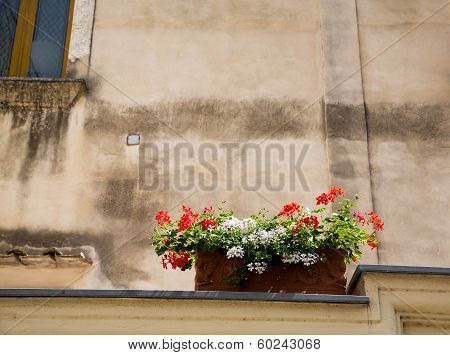 Red And White Flowers In Box On Wall