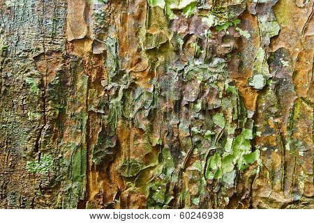 The bark of the tree.