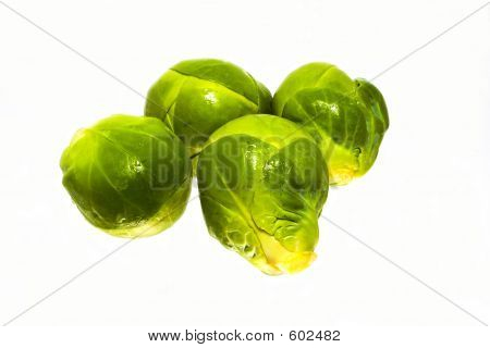 Four Sprouts
