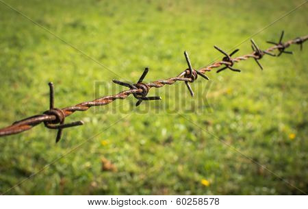 Rusty barbed wire fence on a meadow