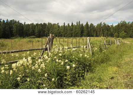 Fence with flowers.