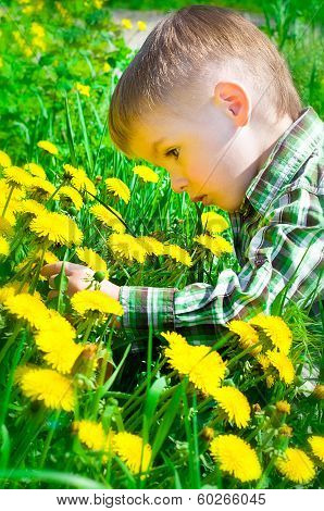 Beautiful boy on meadow surrounded by dandelions