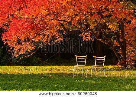 Two Chairs And Red Maple