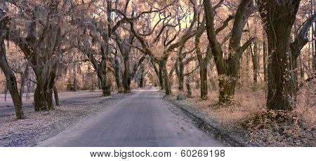 false color infrared photo of empty road through forest canopy