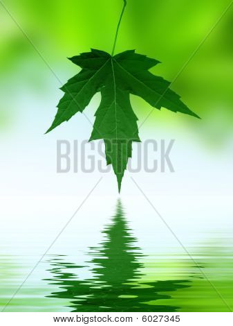 Leaves reflection on the water
