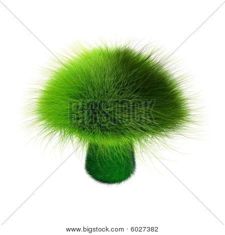 Hairy mushroom