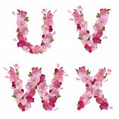 stock photo of v-day  - Vector spring alphabet with gentle pink sakura flowers letters U - JPG