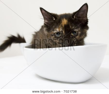 Sad Tortoiseshell In Fish-shaped Dish