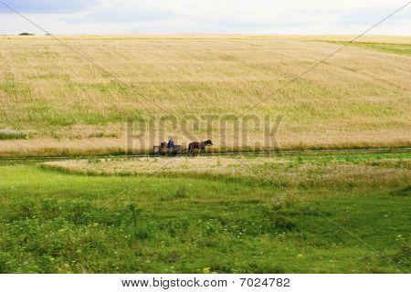 Summer's Landscape. Russia.
