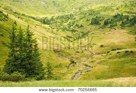 Natural Green Park On A Hill, Beautiful Summer Landscape