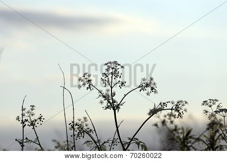 Wild vegetation against the evening sky