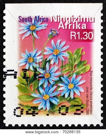 Postage Stamp South Africa 2000 Blue Marguerite, Flowering Plant