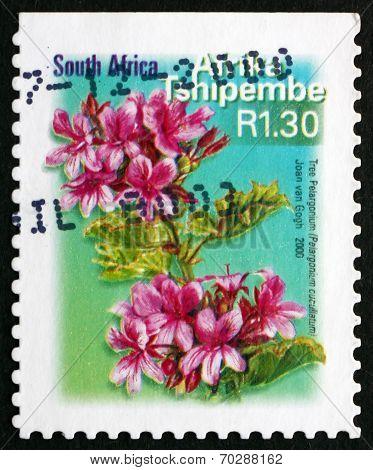Postage Stamp South Africa 2000 Tree Pelargonium, Flowering Plan