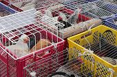 stock photo of chicken-wire  - Chickens and roosters in cages at poultry market - JPG