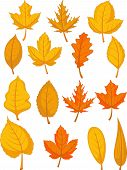 stock photo of elm  - A vector set of autumn leaves - JPG