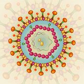 picture of lipids  - Hepatitis B virus - JPG