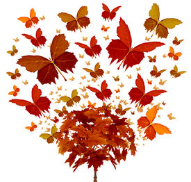 picture of transformation  - Autumn tree concept with magical orange and yellow seasonal leaves flying in the wind transforming into the shape of an open wing butterfly as a symbol of fall celebration and creative freedom - JPG