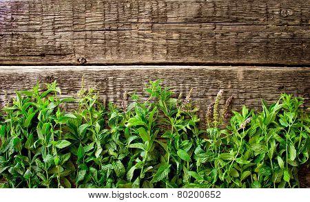 Fresh  mint leaves on  wood background