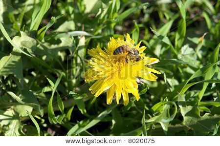 Wild flower and bee.