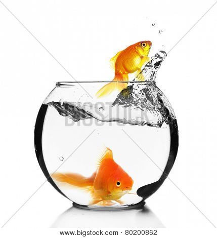 Goldfish jump out of the aquarium, isolated on white