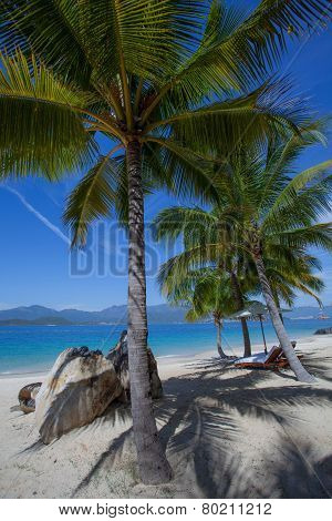 palmiyeler