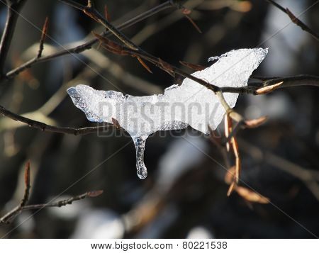 Melting snow on the twig