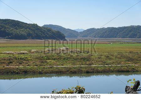 Riverside Of Nakdonggang