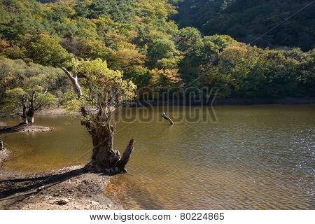 Old Tree At A Shore In Jusanji