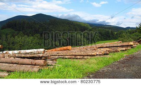 cut trees