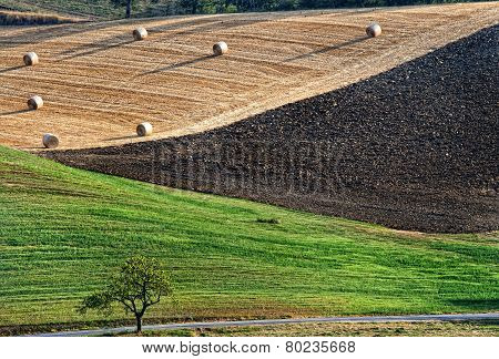 Agriculture Landscape With Straw Bales