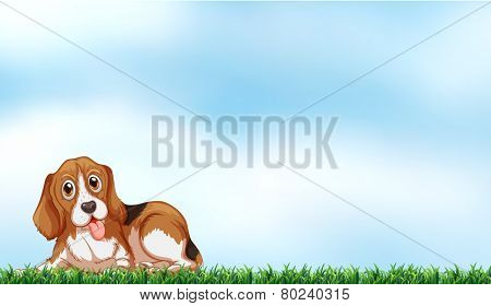 A cute dog under the clear blue sky