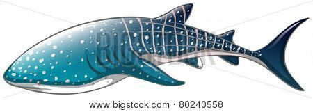 Illustration of a close up whaleshark