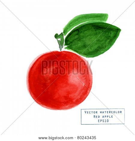 Vector watercolor apple with stalk and leaves.