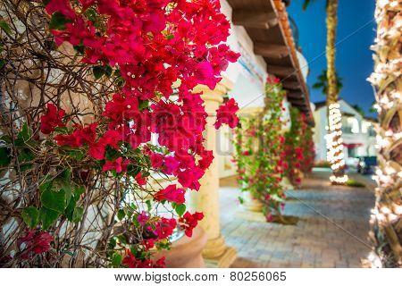 Flowering California