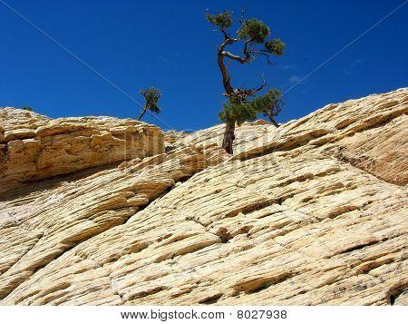 Árvores de bonsai de arenito