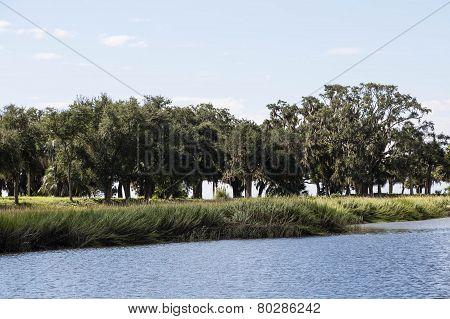 Trees On Marshy Shore