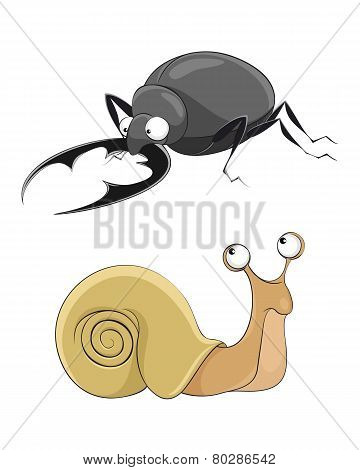 Snail And Stag-beetle