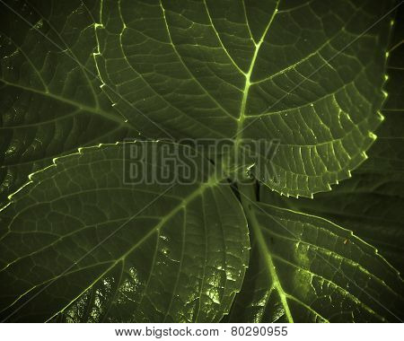 Plant Leaves Closeup