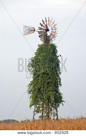 Vine covered Windmill