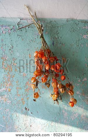 Decorative Dry Plant Hanging On The Old Wall