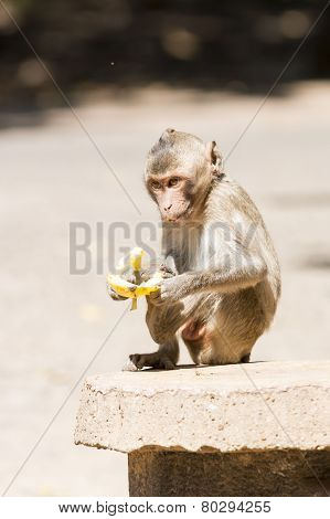 Monkey With A Banana
