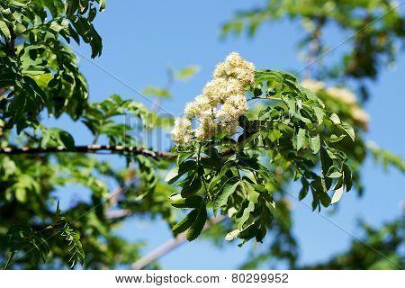 Flowers Rowan