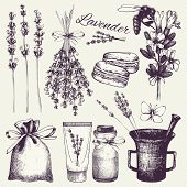 pic of lavender plant  - Vector set of ink hand drawn lavender illustration in lilac color - JPG