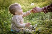 pic of pretty-boy  - Cute Toddler boy looks at the nature of the dandelion - JPG